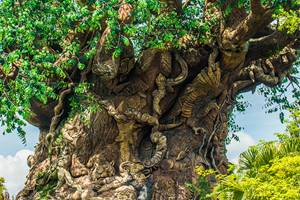 Major Attractions at Disney Animal Kingdom
