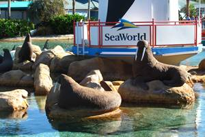SeaWorld Quick Facts